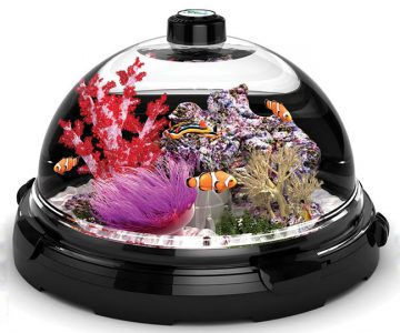 Tabletop Saltwater Aquarium