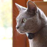 Pod GPS Tracker & Activity Monitor for Pets
