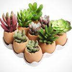 Egg Design Planter Pot Set