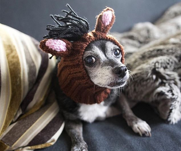 Horse Dog Snood