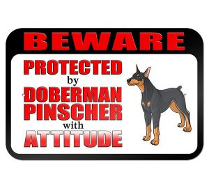 Doberman Pinscher with Attitude