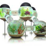 Labyrinth Fish Tank