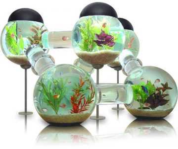 Labyrinth Fish Tank