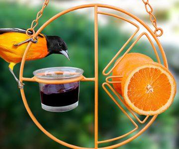 Clementine Oriole Bird Feeder