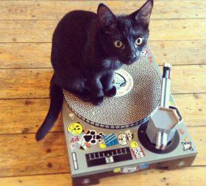 Cat Scratching DJ Deck