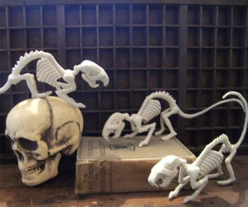 Sewn Bone Rat Skeleton