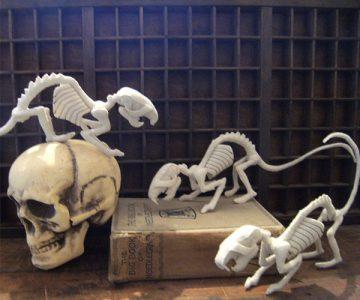 Sewn Bone Rat Skeleton