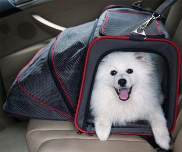 Petsfit Expandable Foldable Pet Carrier