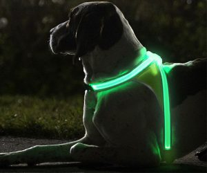 Glow Illuminated and Reflective Vest for Dogs
