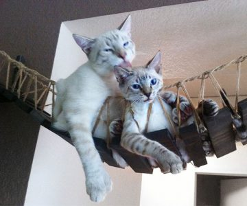 Indiana Jones Cat Bridge for Pets