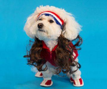American Dog Mullet Headband