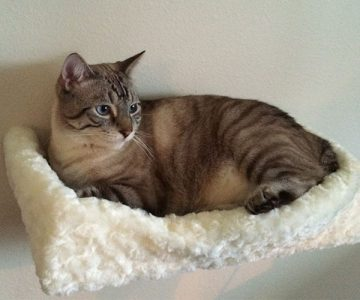 Cuddly Plush Padded Cat Bed Shelf