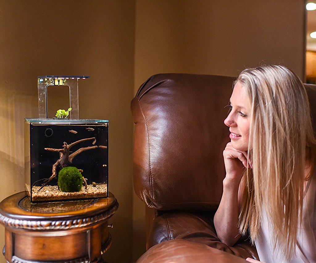 EcoQube C Desktop Aquarium