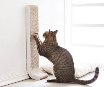 Cat Scratching Wall