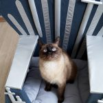 Cat Loves this Iron throne