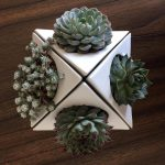 Cactus and Airplant Ceramic Planter Pot