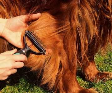 Dematting Comb for Dogs